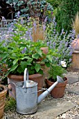 OLD WATERING CAN WITH COLLECTION OF TERRACOTTA POTS