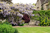 ROUND ARCH IN STONE WALL AT BIDDESTONE MANOR, WITH WISTERIA AND ACER PALMATUM