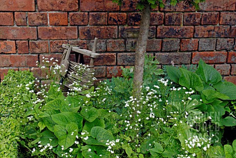 BRUNNERA_MACROPHYLLA_BETTY_BOWRING_AND__TRADITIONAL_GARDEN_STRING_LINE