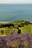 SEA VIEW WITH LAVANDULA ANGUSTIFOLIA HIDCOTE AND PRIVET HEDGES AT CLIFF HOUSE, DORSET