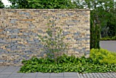 MODERN DRY STONE WALL WITH HEDERA AND ALCHEMILLA MOLLIS