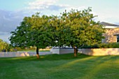 APPLE TREES IN UNDULATING LAWN IN CONTEMPORARY GARDEN DESIGN
