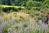ALLIUM SEEDHEADS IN COUNTRY GARDEN
