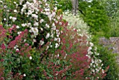 RAMBLING ROSES, CRAMBE CORDIFOLIA AND RED VALERIAN DRAPED OVER WALL AT HANHAM COURT