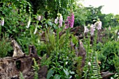FERNS AND FOXGLOVES IN THE STUMPERY AT HANHAM COURT
