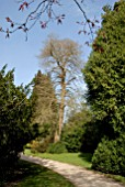 TAXODIUM DISTICHUM AT DYFFRYN GARDEN