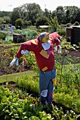 SCARECROW COMPETITION, DAGGS ALLOTMENTS, THORNBURY, BRISTOL. NGS OPEN DAY
