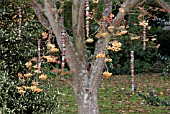 SORBUS JOSEPH ROCK BERRIES IN LATE AUTUMN WITH HANGING WOOD SCULPTURES
