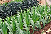 LEEKS AND KALE NERO DI TOSCANA IN VEGETABLE PLOT