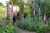 DIGITALIS PURPUREA AND NIGELLA DAMASCENA IN COTTAGE GARDEN BORDER