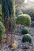 FROSTY GARDEN WITH BOX TOPIARY AND ECHINACEA SEEDHEADS