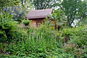 SUMMERHOUSE IN THE HIMALAYAN GLADE AT ABBOTSBURY SUB-TROPICAL GARDEN
