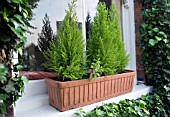 WINDOW BOX WITH CONIFERS