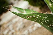GRAFFITI CARVED INTO LEAF