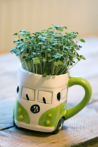 GROWING_CRESS_SEEDS