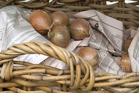 STORAGE_OF_ONION_HARVEST