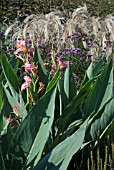 TALL BORDER PLANTING WITH VERBENA, CANNA AND MISCANTHUS