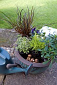 PLANTING WINTER INTEREST POT WITH BULBS FOR SPRING
