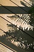 SHADOWS OF FERNS