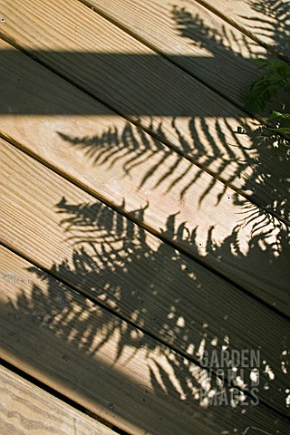 SHADOWS_OF_FERNS