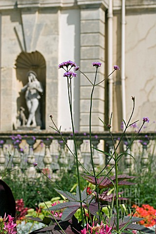 VERBENA_BONARIENSIS_AND_RICINUS_FOLIAGE_IN_FRONT_OF_STATUE_IN_NICHE_AT_DYFFRYN_GARDENS__WALES