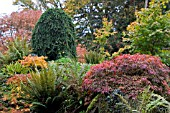 AUTUMN COLOUR AT HERGEST CROFT,  HEREFORDSHIRE,  OCTOBER