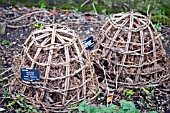BAMBOO CLOCHES FOR OVERWINTERING,  BEGONIA GRANDIS