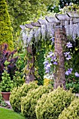 PERGOLA WITH WISTERIA AND CLEMATIS IN SUMMER