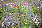 WILDFLOWER MEADOW,  AUGUST