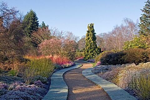 FROSTY_WINTER_GARDEN_AT_CAMBRIDGE_BOTANICAL_GARDENS_