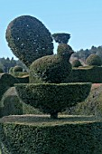 TOPIARY PEACOCK AT FELLEY PRIORY GARDEN,  NOTTINGHAMSHIRE