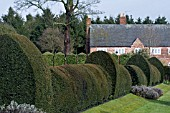 TOPIARY HEDGE AT FELLEY PRIORY GARDEN,  NOTTINGHAMSHIRE