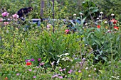 VIEW OF THE OVERGROWN STOCK BEDS IN THE GARDEN OF THE WINNER OF BBC GARDENERS WORLD 2006 SUE BEESLEY AT DUTTON