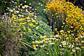 NCCPG NATIONAL COLLECTION OF ANTHEMIS WINTERBOURNE BOTANIC GARDEN UNIVERSITY OF BIRMINGHAM