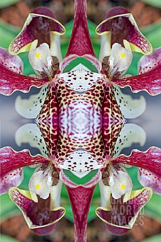 KALEIDOSCOPIC_ORCHIDS