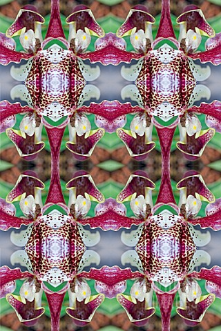 KALEIDOSCOPIC_ORCHIDS_AS_WALLPAPER
