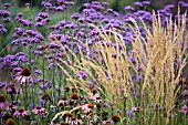 VERBENA BONARIENSIS,  ECHINACEA PURPUREA,  AND STIPA IN ASSOCIATION