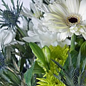 GERBERA, DAHLIA AND ERYNGIUM IN ASSOCIATION