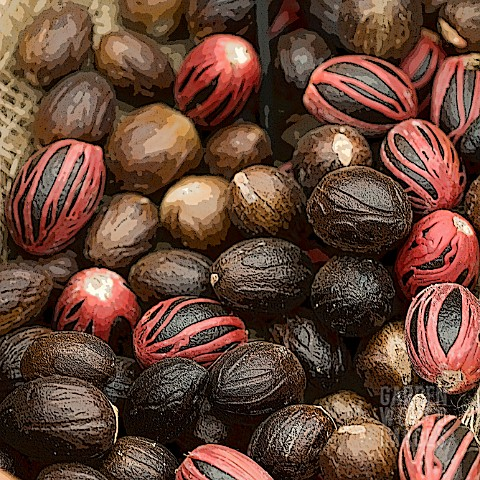 MACE_COVERED_NUTMEGS_MANIPULATED