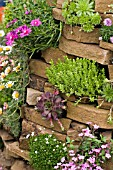 CREVICE PLANTING WITH SEDUM AND SEMPERVIVUM