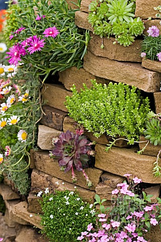 CREVICE_PLANTING_WITH_SEDUM_AND_SEMPERVIVUM