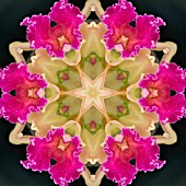 ORCHIDS, KALEIDOSCOPIC