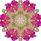 ORCHIDS, KALEIDOSCOPIC, MANIPULATED