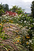 MISCANTHUS IN DOROTHY CLIVE GARDEN