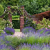 VIEW THROUGH LAVENDER TO ROSE GARDEN AT WINTERBOURNE BOTANICAL GARDEN, UNIVERSITY OF BIRMINGHAM