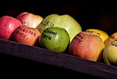 APPLES WITH THEIR NAMES WRITTEN ON IN PEN