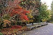 VIEW OF ACER WALK WITH RED ACER PALMATUM AT BIRMINGHAM BOTANICAL GARDENS AND GLASSHOUSES, NOVEMBER