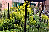VIEW OF METAL RAILINGS LEADING TO VEGETABLE AREA AT RYTON ORGANIC GARDEN,  COVENTRY,  MAY