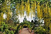 LABURNUM WALK AT THE GARDEN AT THE BANNUT,  BRINGSTY,  HEREFORDSHIRE,  MAY