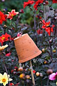 UPTURNED PLANT POT ON STICK FILLED WITH STRAW USED FOR TRAPPING EARWIGS AMONGST DAHLIAS